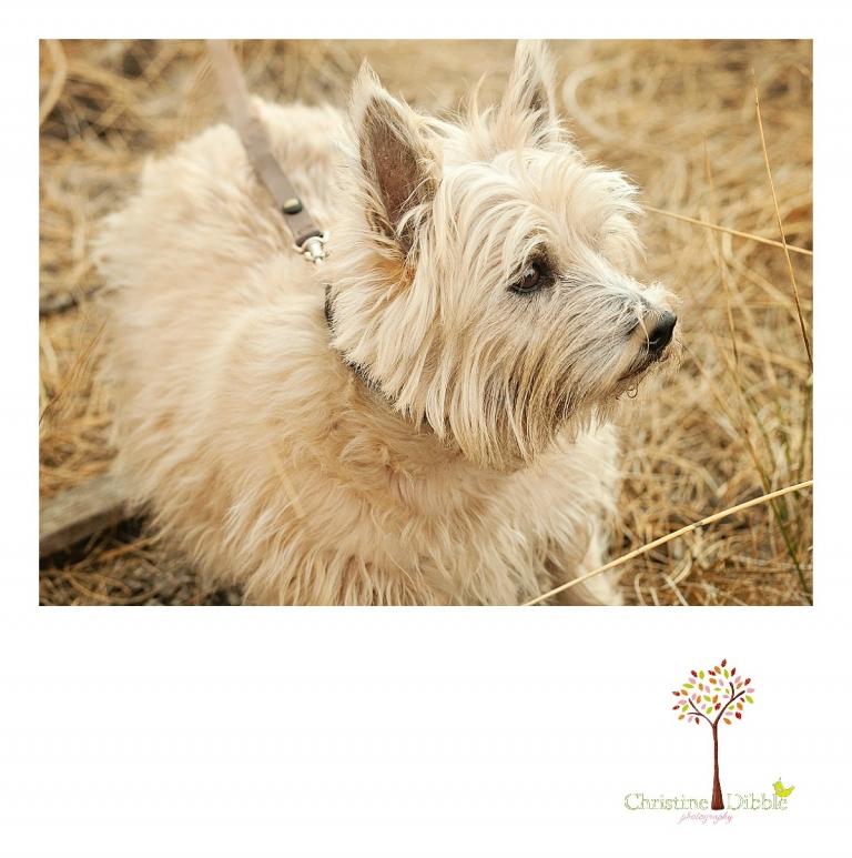 Sonora, CA Custom Portrait Photographer Christine Dibble Photography_0326.jpg