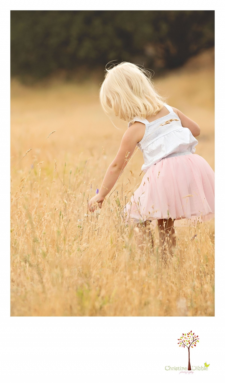 Sonora childrens photographer Christine Dibble Photography takes photos of a little girl picking flowers in a field during summer as the breeze blows her hair.