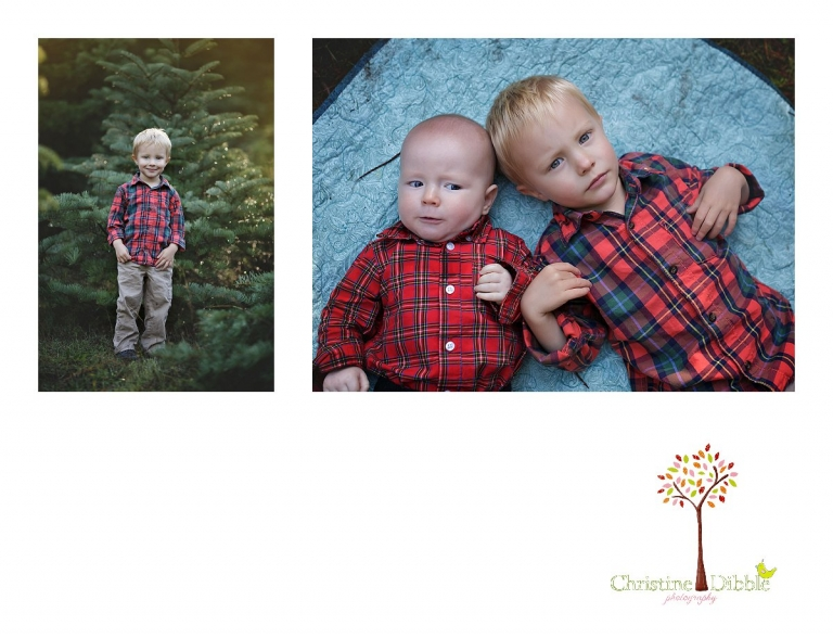 Sonora childrens photographer Christine Dibble Photography takes photos of two young brothers at Twain Harte Tree Farm during December mini sessions.