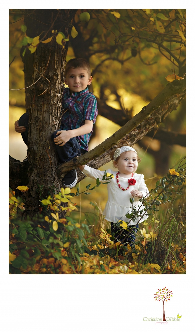 Two young children climb a tree during a Sonora family photography session photographed by Christine Dibble Photography at Indigeny Reserve in the fall among the apple orchards.