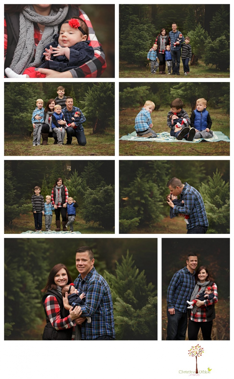Twain Harte Tree Farm and Sonora Family Photographer, Christine Dibble Photography, takes family and child portraits in beautiful light among the Christmas trees in the fields during the Twain Harte Tree Farm mini sessions in December.