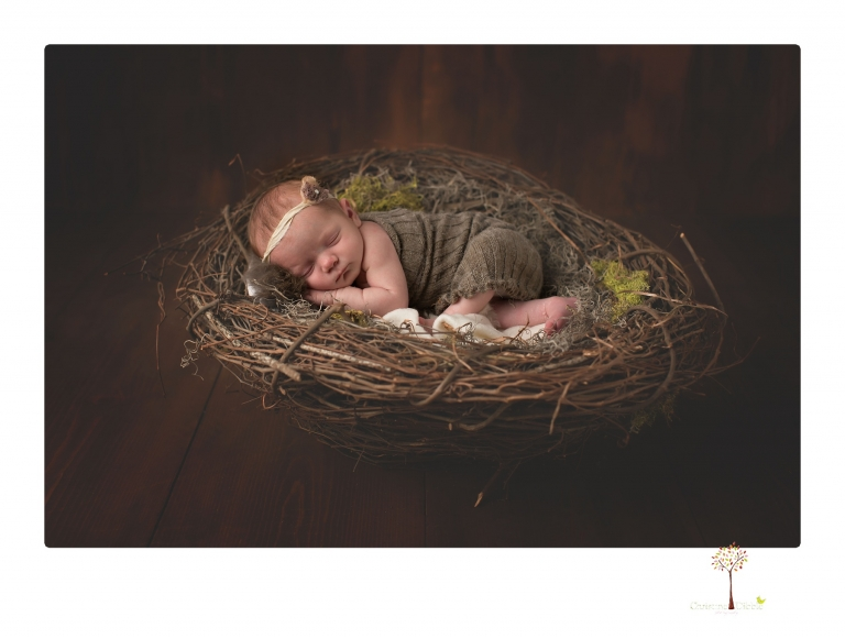 Sonora newborn photographer Christine Dibble Photography photographs a newborn baby girl in a bird's nest built just for her.