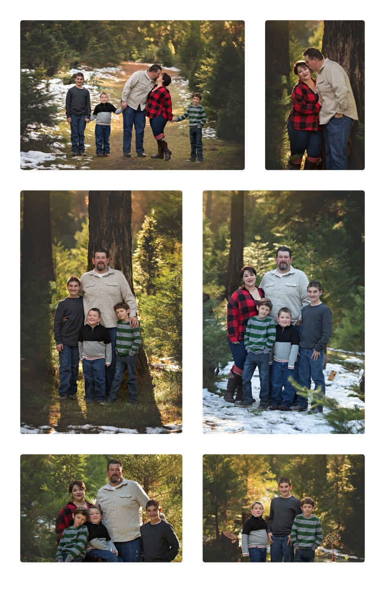Sonora family photographer Christine Dibble Photography takes family and maternity portraits during her annual Twain Harte Tree Farm mini sessions in December.